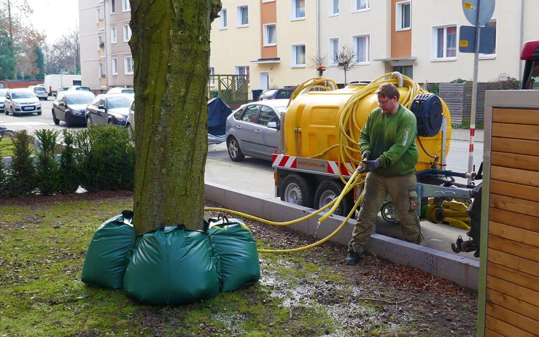 Baumbewässerung
