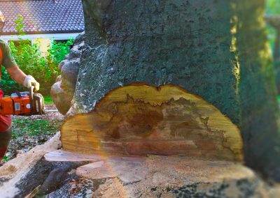 KRE_BaumfällungWelfengarten_03