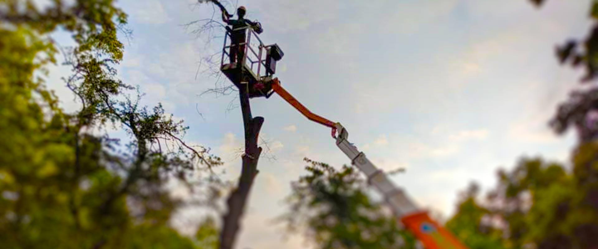 Unsere Woche   Baumfaellung