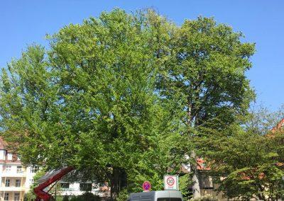 Unsere Woche | Baumpflege