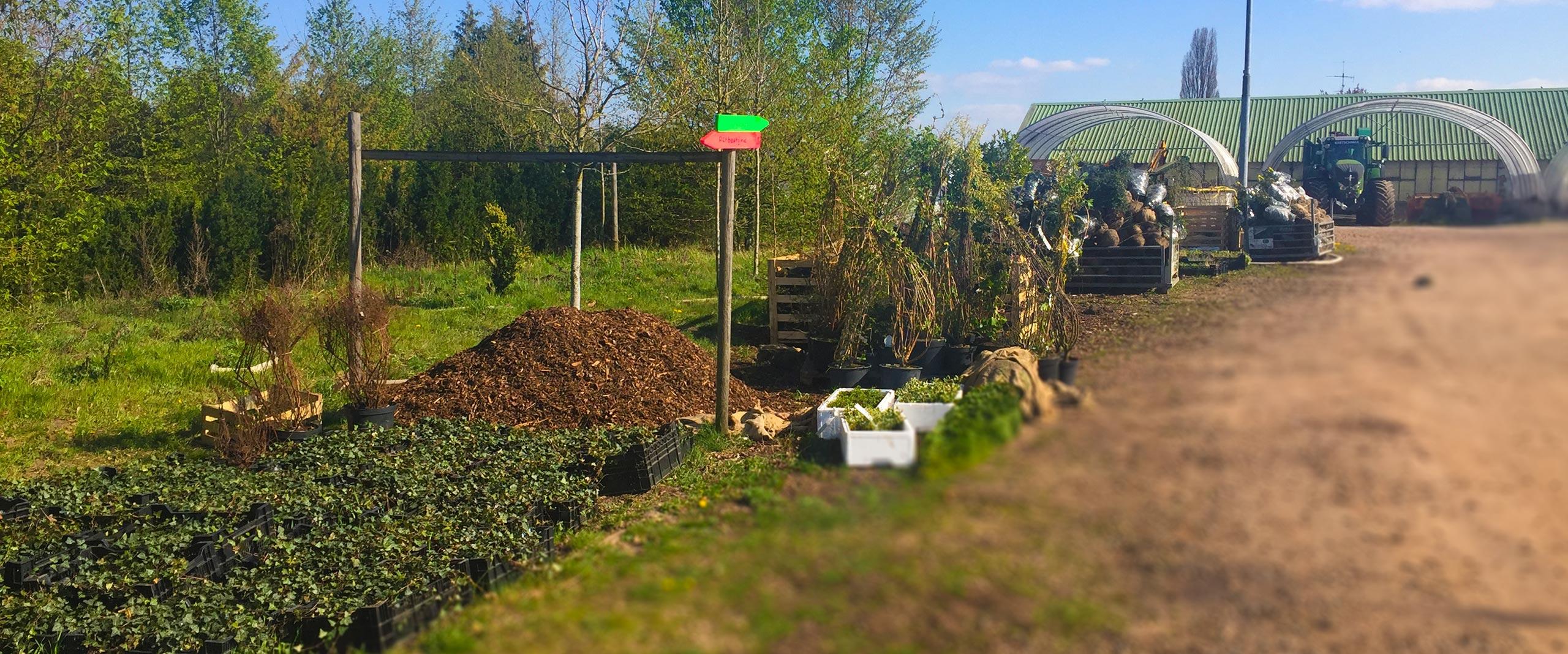 Unser Woche | Pflanzenlieferung