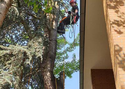 KRE_KW_26_Baumpflege2Unsere Woche | Baumpflege